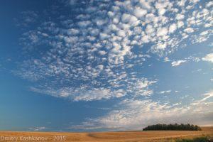 Закат над овсяным полем
