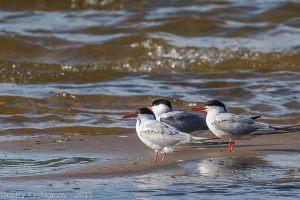 Речные птицы на островке