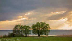 Деревья на берегу Плещеева озера. Фото
