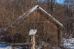 Кот на столбике. Музей на Щелковском хуторе