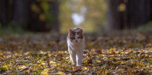 Кот в липовой аллее усадьбы Подвязье