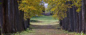 Липовая аллея в усадьбе Подвязье. Нижегородская область. Вид от конца аллеи