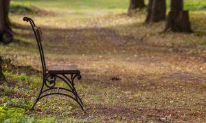 Скамейки в липовой аллее усадьбы Подвязье