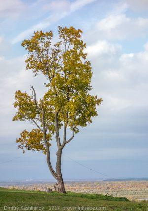 Одинокое дерево, растущее между липовой аллеей и господским домом