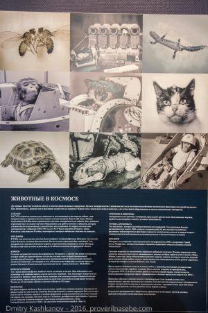 Плакат Животные в космосе. Музей космонавтики и ракетной техники. Санкт-Петербург